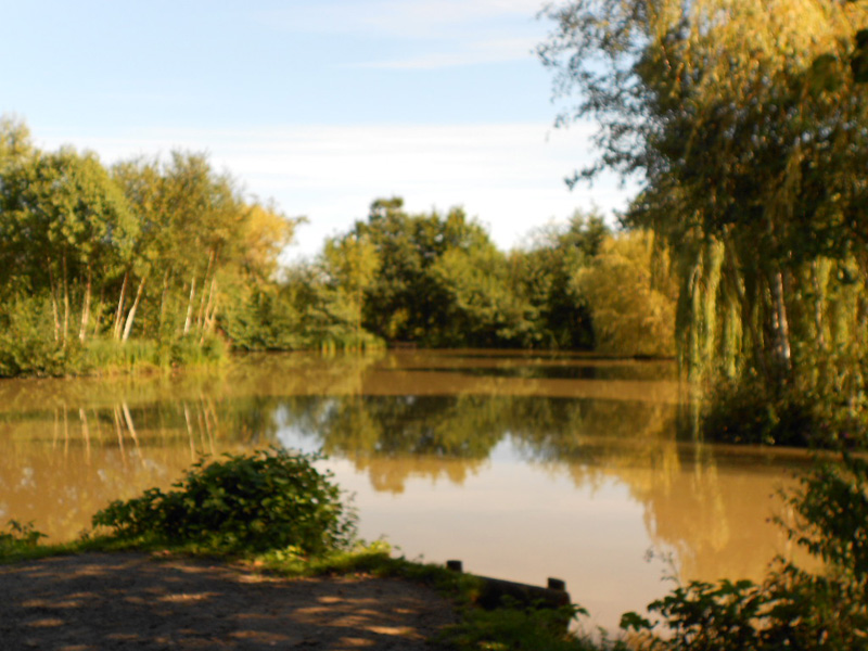 sessay lakes Messingham sands - hollywood lake one of the uk's leading fishing complexes the oaks lakes at sessay in north yorkshire is home to lakes for both match and.